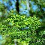 ヒノキ花粉のアレルギー症状は何?スギ花粉との違いとは?